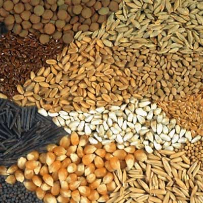 Raw food Grains Suppliers & Exporters in Muzaffarnagar